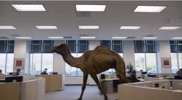 camelpeg
