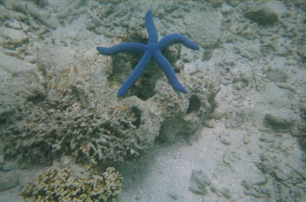 Snorkel & Scuba (26)