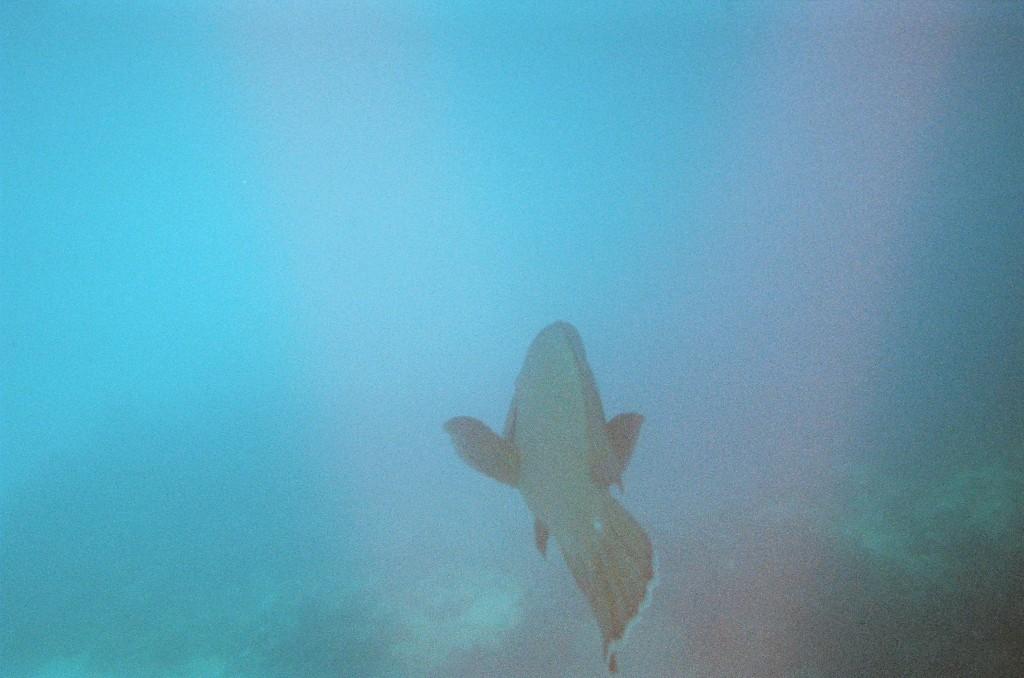 Snorkel & Scuba (45)