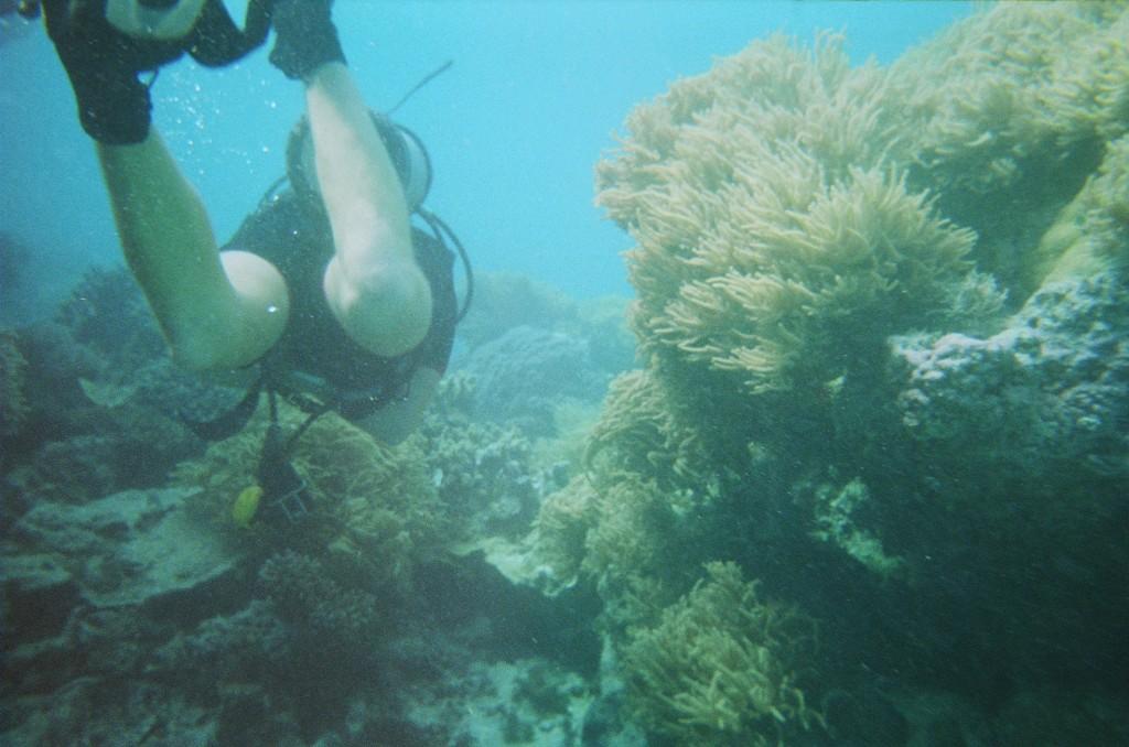 Snorkel & Scuba (49)