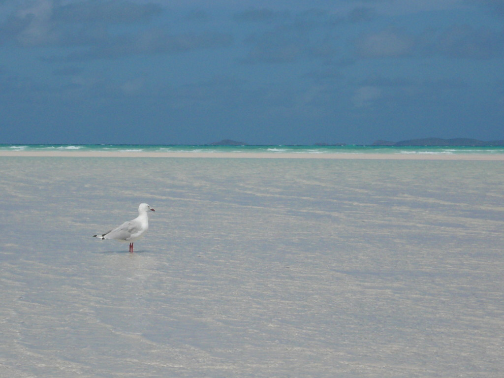 Whitsunday Islands & GBR January 2007 (80)