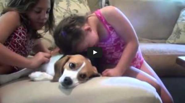 spanky the beagle