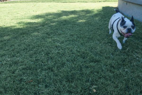 hance park dog park