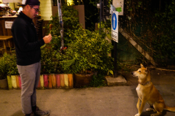 street dogs in thailand