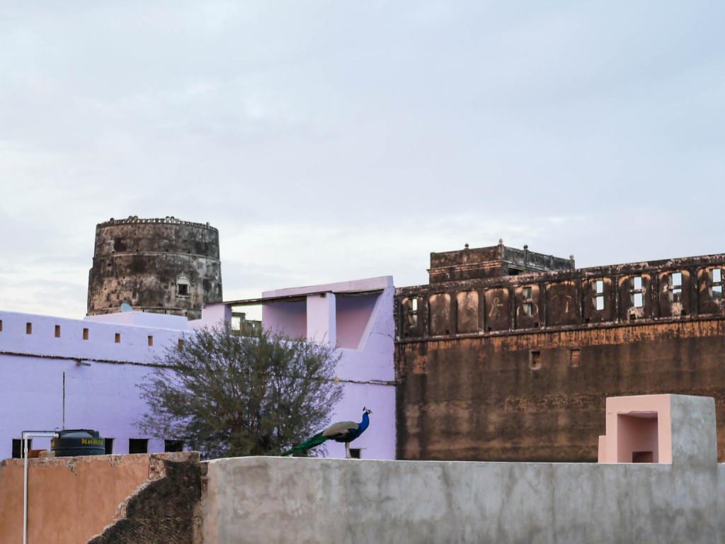 mandawa, india
