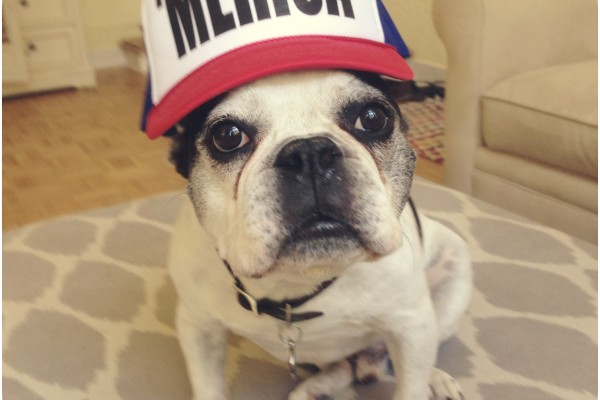 french bulldogs of the world cup