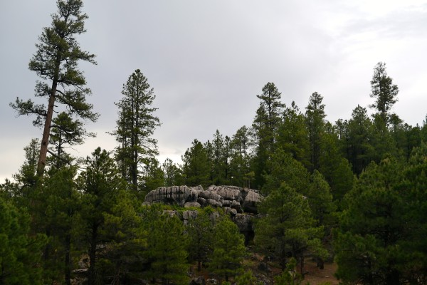 where to camp in arizona
