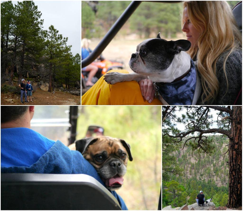where to camp in arizona